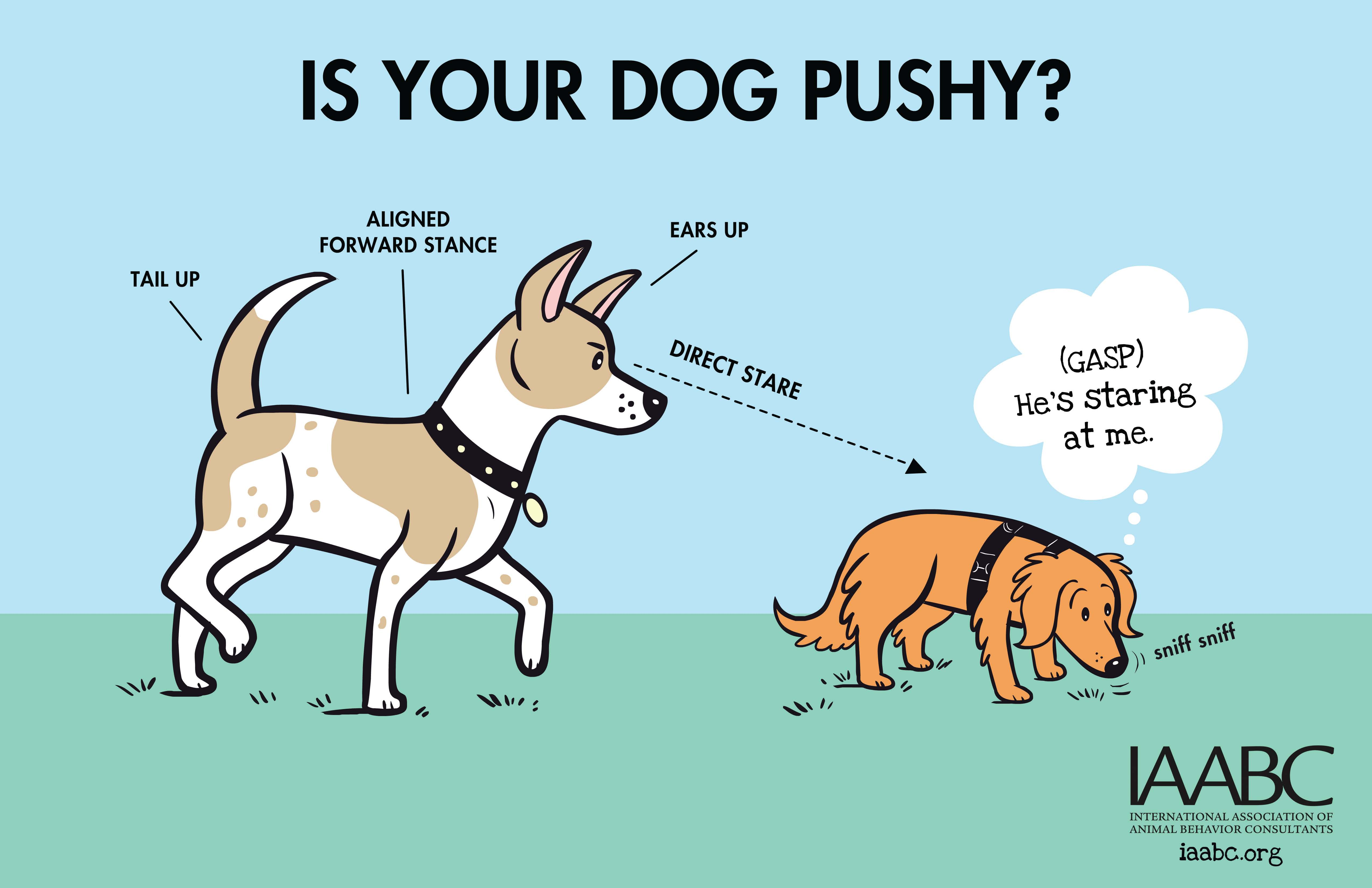 Dog Park Posters