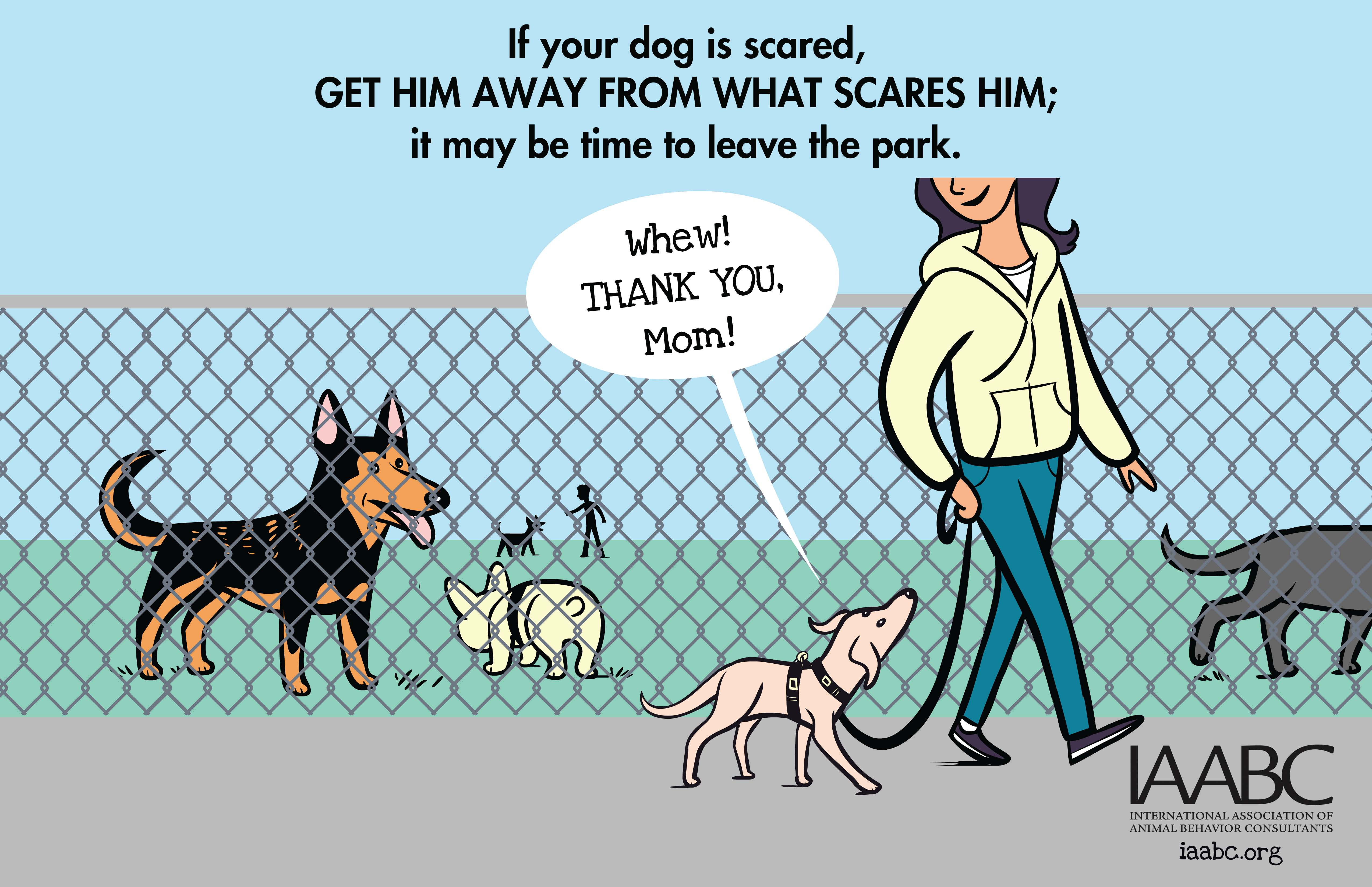 How To Get A Dog Ready For The Dog Park