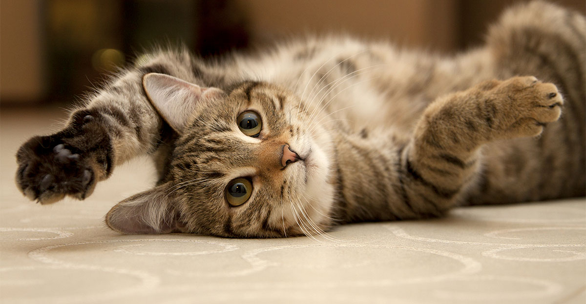 playful cat on ground