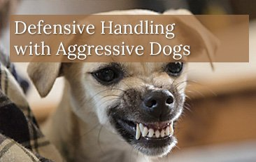 Defensive Handling with Aggressive Dogs