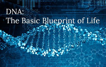 DNA: The Basic Blueprint of Life