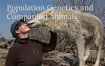 Population Genetics and Companion Animals