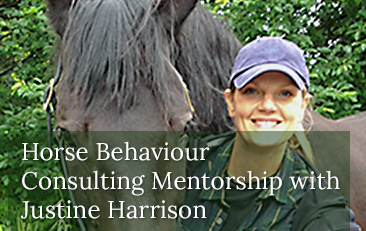 Horse Behavior Consulting Mentorship with Justine Harrison