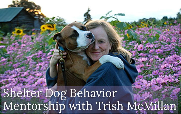 Shelter Dog Behavior Mentorship with Trish McMillan Loehr