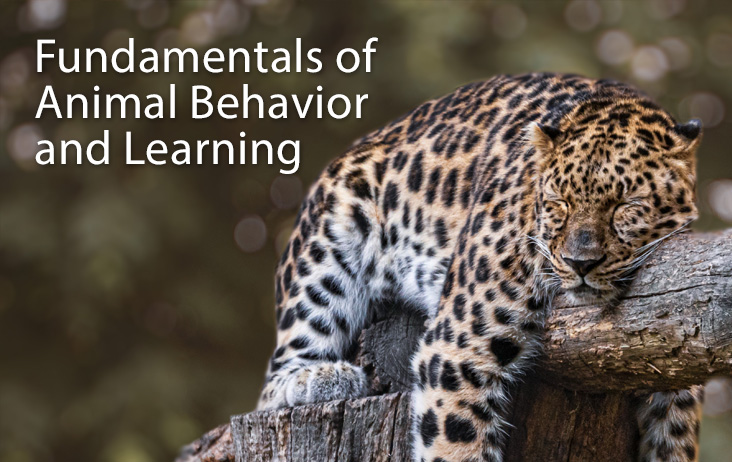 Fundamentals of Animal Behavior and Learning