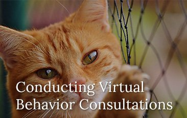 Conducting Virtual Behavior Consultations