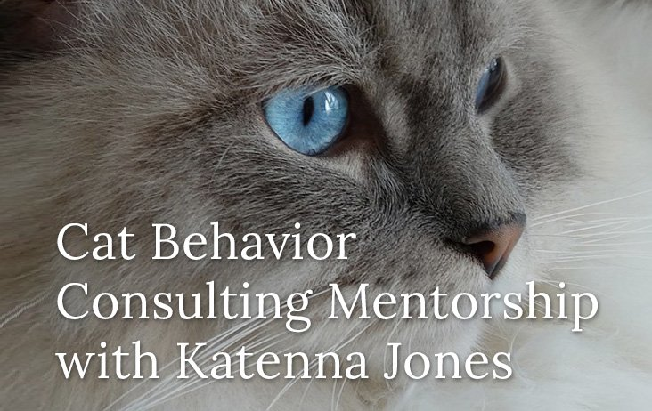 Cat Behavior Consulting Mentorship with Katenna Jones