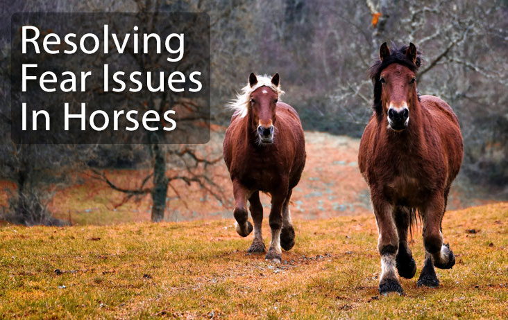 Resolving Fear Issues in Horses