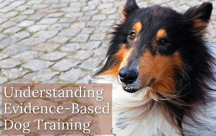 Understanding Evidence-Based Dog Training