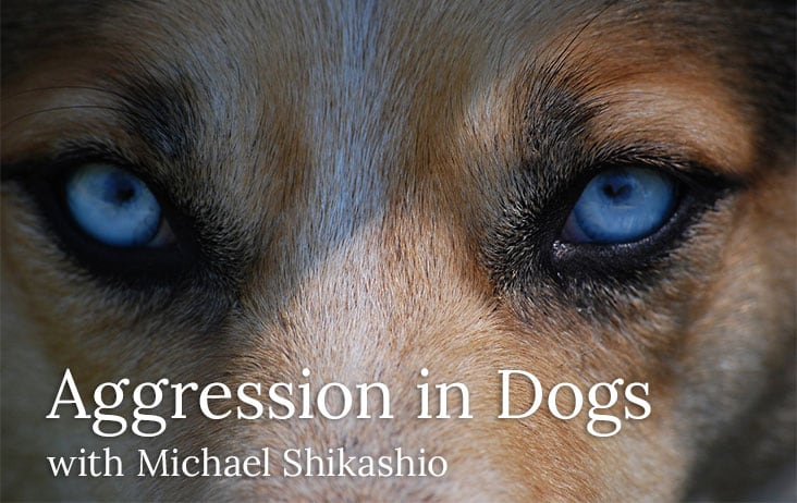 Aggression in Dogs with Michael Shikashio