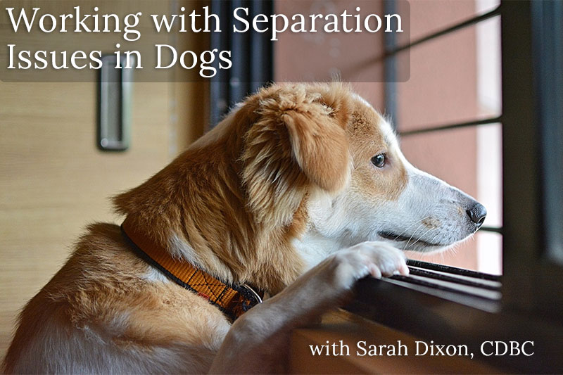 Working With Separation Issues in Dogs