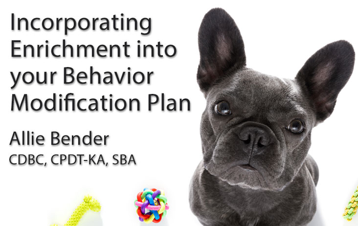 Incorporating Enrichment into Your Behavior Modification Plan