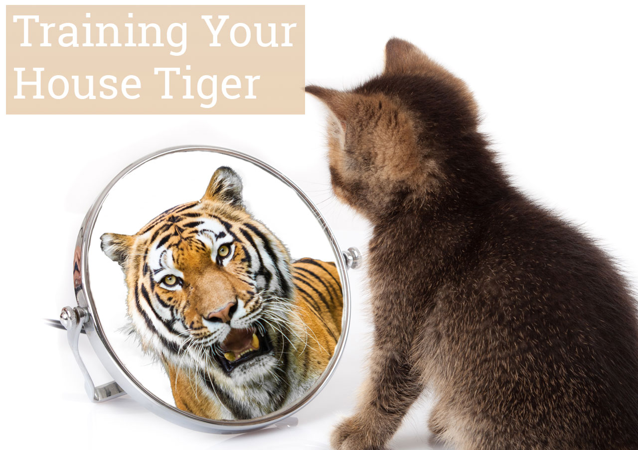 Training Your House Tiger
