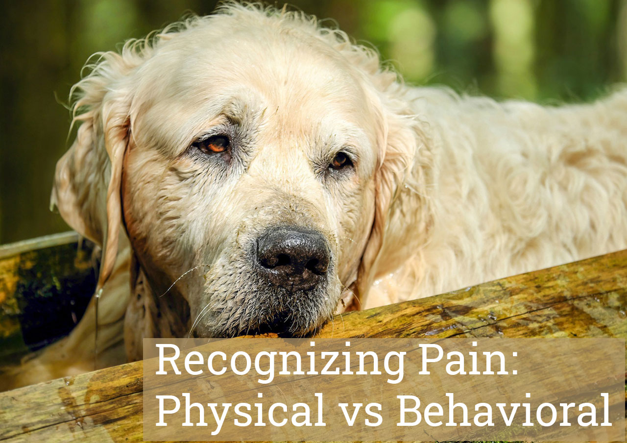 Recognizing Pain: Physical vs Behavioral